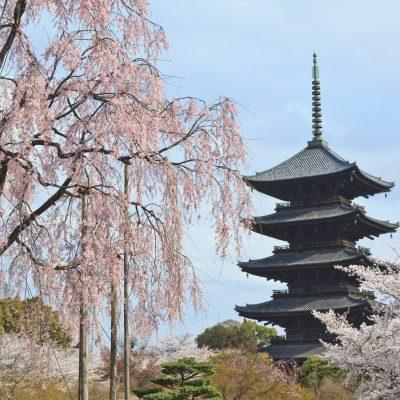 🌸募集終了致しました🌸京の春 桜の名所『東寺』非公開特別拝観